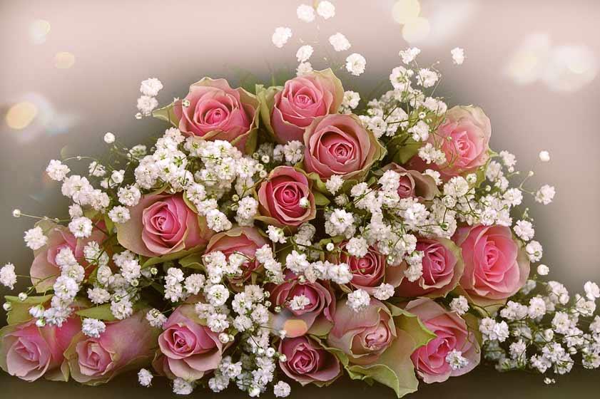 blumenstrauss rosen